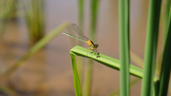 dragonfly with its lunch.